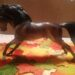 The Progeny – Gift Set Mesteño and His Yearling Rojo